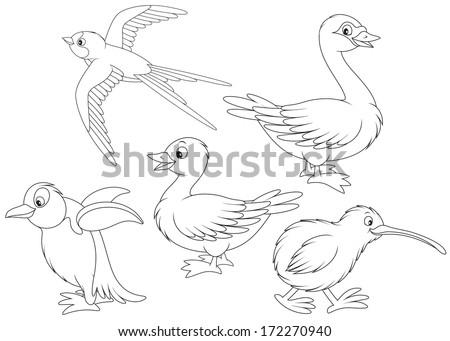 martin  duck  swan  kiwi and