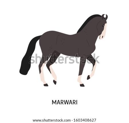 Friends of Marwari / Kathiawari Horse UK - Home | Facebook