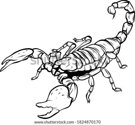 Mascot icon illustration of a scorpion, a predatory arachnid of the order Scorpiones ストックフォト ©