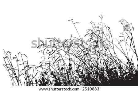 meadow grass silhouette  change