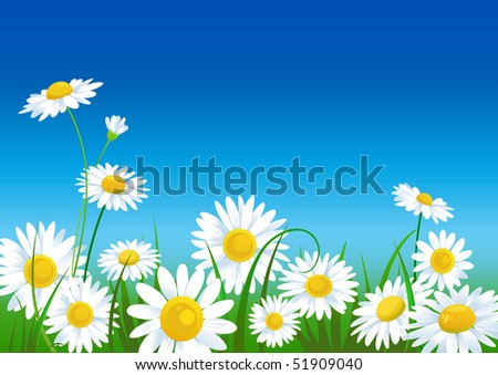 meadow with daisies with space