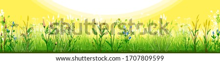 Meadow with flowers and sun. Morning day. Flowering grass. Grassy landscape. Vector background. Horizontal view of spring summer forbs. Green yellow paysage. Plants, Herbs. Bright beautiful scenery.