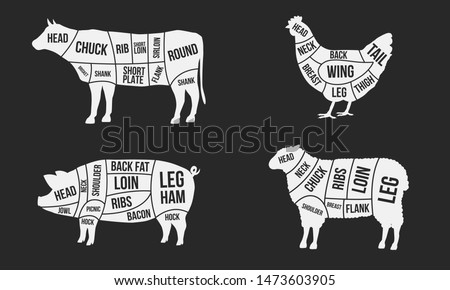 Meat cuts diagrams. Beef, pork, mutton and chicken cuts of meat. Vintage poster for groceries, butcher shop and meat store. Vector illustration