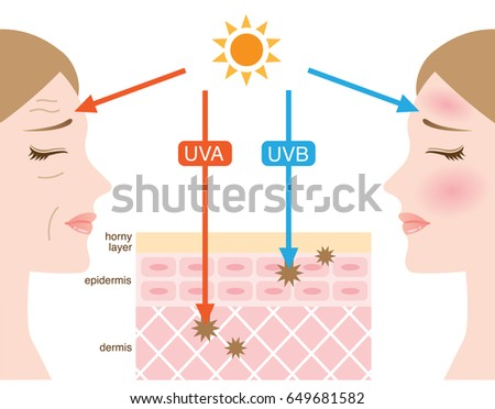 mechanism of UVA and UVB radiation Foto stock ©