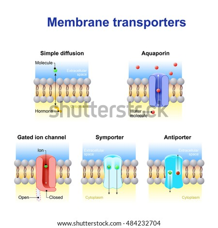 Mechanisms for the transport of ions and molecules across cell membranes. Types of a channel in the cell membrane: simple diffusion, Aquaporin, Gated ion channel, Symporter and Antiporter. Foto d'archivio ©
