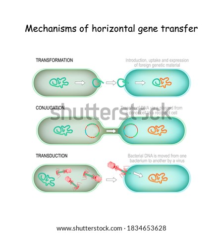 Mechanisms of horizontal gene transfer. conjugation (Transfer of DNA via a plasmid from a donor cell to a recipient), transduction (Bacterial DNA is moved from one bacterium to another by a virus) Stockfoto ©