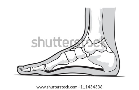 Medial foot anatomy
