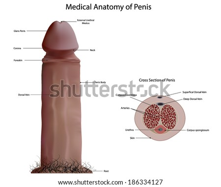 Of medical penis pictures