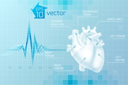 Medical care background with human heart anatomy on light blue background in digital style vector illustration