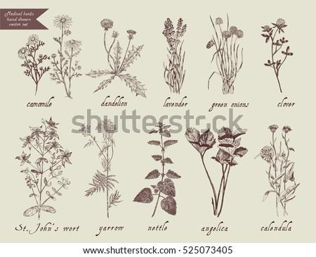 medical herbs set hand drawn