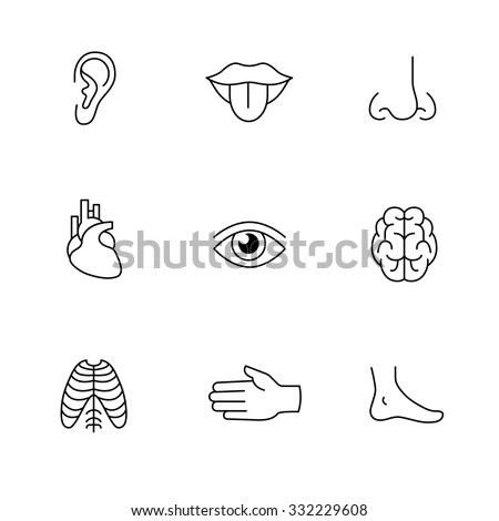 Medical icons thin line art set. Human organs, senses, and body parts. Black vector symbols isolated on white.
