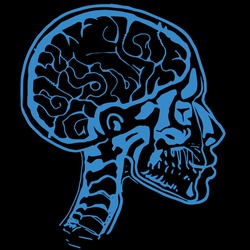 Medical X-ray scan of a male human head with skull and brain.