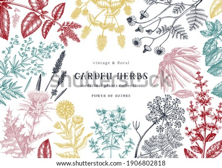 Medicinal herbs background. Hand sketched summer flowers, herbs, weeds, and meadows design. Vintage plant illustrations. Botanical elements in engraved style. Medicinal herbs vector frame