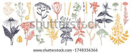 Medicinal herbs collection in color. Vector set of hand drawn  herbs, weeds and meadows. Vintage plants with insects illustration. Botanical elements in engraved style. Wild flowers outlines set.