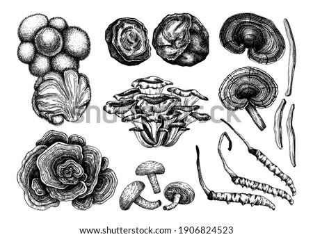 Medicinal mushroom illustrations collection. Hand sketched adaptogenic plants set. Perfect for recipe, menu, label, packaging. Hand sketched mushroom outlines. Botanical elements in vintage style.
