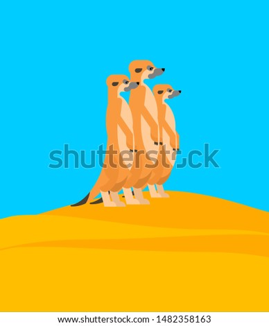 meerkats family on hill small