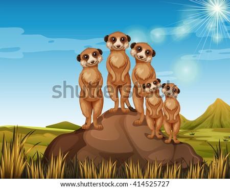 meerkats standing on rock