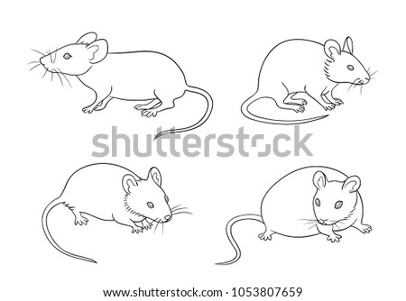 mice in different posesin