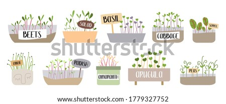 Micro greens. Beet, salad, basil, cabbage, sorrel, onion, radish, amaranth, arugula, pea. Fresh organic sprouted seeds. Healthy nutrition concept. Growing superfood at home. Vector flat illustration. Photo stock ©