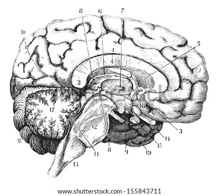 middle and anterior posterior