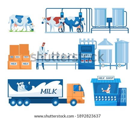Milk production steps set. Truck, cows on grass, milking machines, worker at conveyor with bottles, milk and cheese shop and stand. For dairy, food industry, technology, dairy factory concept