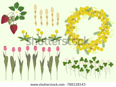 Mimosa flowers and spring plant material collection.