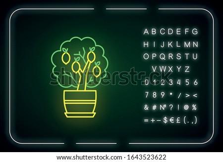 miniature lemon tree neon light