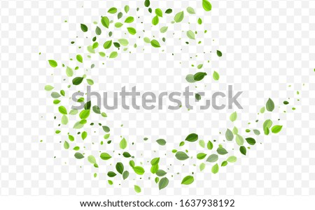 Mint Foliage Vector Concept. Green Leaf Flying Poster. Forest Border. Grassy Leaves Fresh Template.