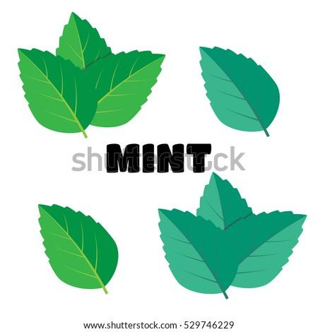 Shutterstock Mint green vector illustration set. Mint logo vector