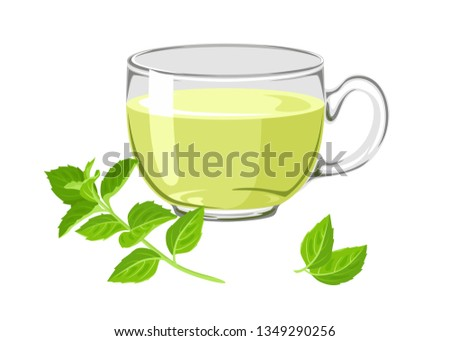 Mint tea in glass cup isolated on white background. Branch and leaves of fresh mint. Vector illustration of healing drink  in cartoon simple flat style.