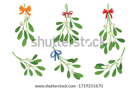 Mistletoe or Viscum Branches with Oblong Leaves and Berries Tied in Ribbons Vector Set Foto stock ©