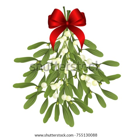 mistletoe vector illustration