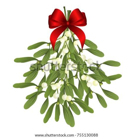 mistletoe vector illustration