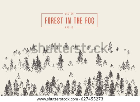 misty fog in pine forest on