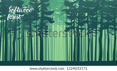 misty landscape with fir forest