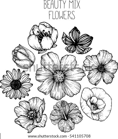 mix flowers drawing vector