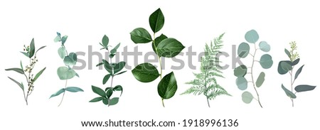 Mix of herbs and plants vector big collection. Cute rustic wedding greenery.True blue, silver dollar eucalyptus, foliage, fern, salal leaves and stems. Watercolor style set. All elements are isolated Photo stock ©