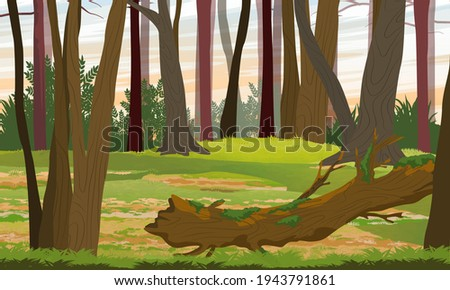 Mixed forest. Tree trunks, bushes and a fallen tree covered with moss. Realistic vector landscape