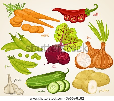 Mixed vegetable vector illustration. Carrot, onion, potato and other fresh vegetables. Natural food.