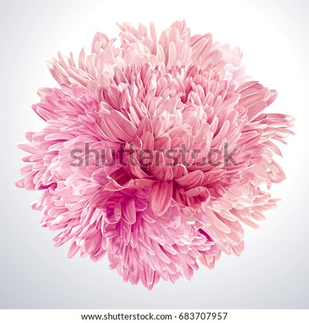Modern floral art - Pink Asters and Chrysanthemums. Flower vector composition made in the form of a ball for wedding decoration, Valentine's Day,  Mother's Day, sales and other events #683707957