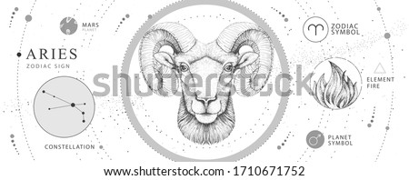 Modern magic witchcraft card with astrology Aries zodiac sign. Realistic hand drawing ram or mouflon head. Zodiac characteristic