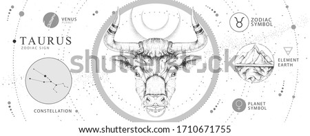 Modern magic witchcraft card with astrology Taurus zodiac sign. Realistic hand drawing bull head. Zodiac characteristic
