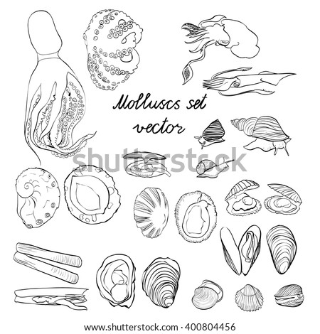 Molluscs set vector illustration. Black and white linear graphic. Easy to scale. Perfect for restaurant business, decorating, textile printing etc.