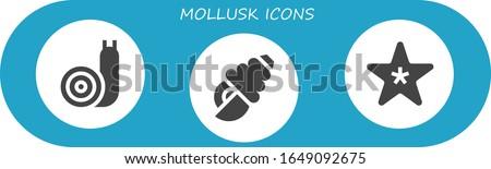 mollusk icon set 3 filled