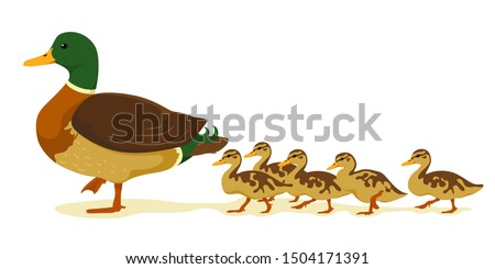 Mom duck with ducklings in cartoon flat style. Vector isolate on a white background. Wild ducks.