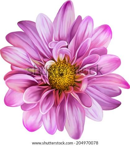 Mona Lisa flower, Pink flower, Spring flower.Isolated on white background.