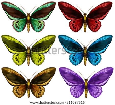 monarch butterflies in six