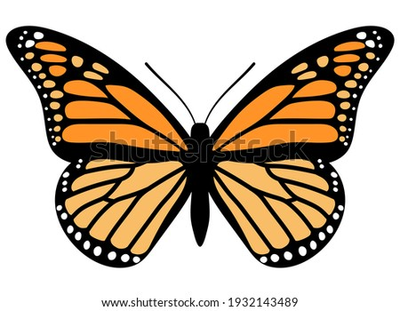 Monarch butterfly. Hand drawn vector illustration. Stock photo ©