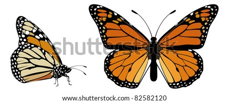 Monarch Butterfly top and side view