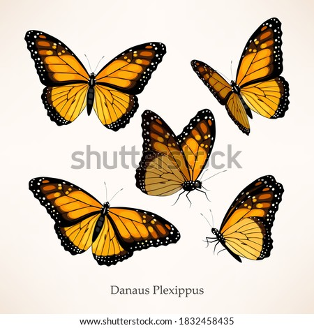 Monarch butterfly vector art in several different views and poses Stock photo ©